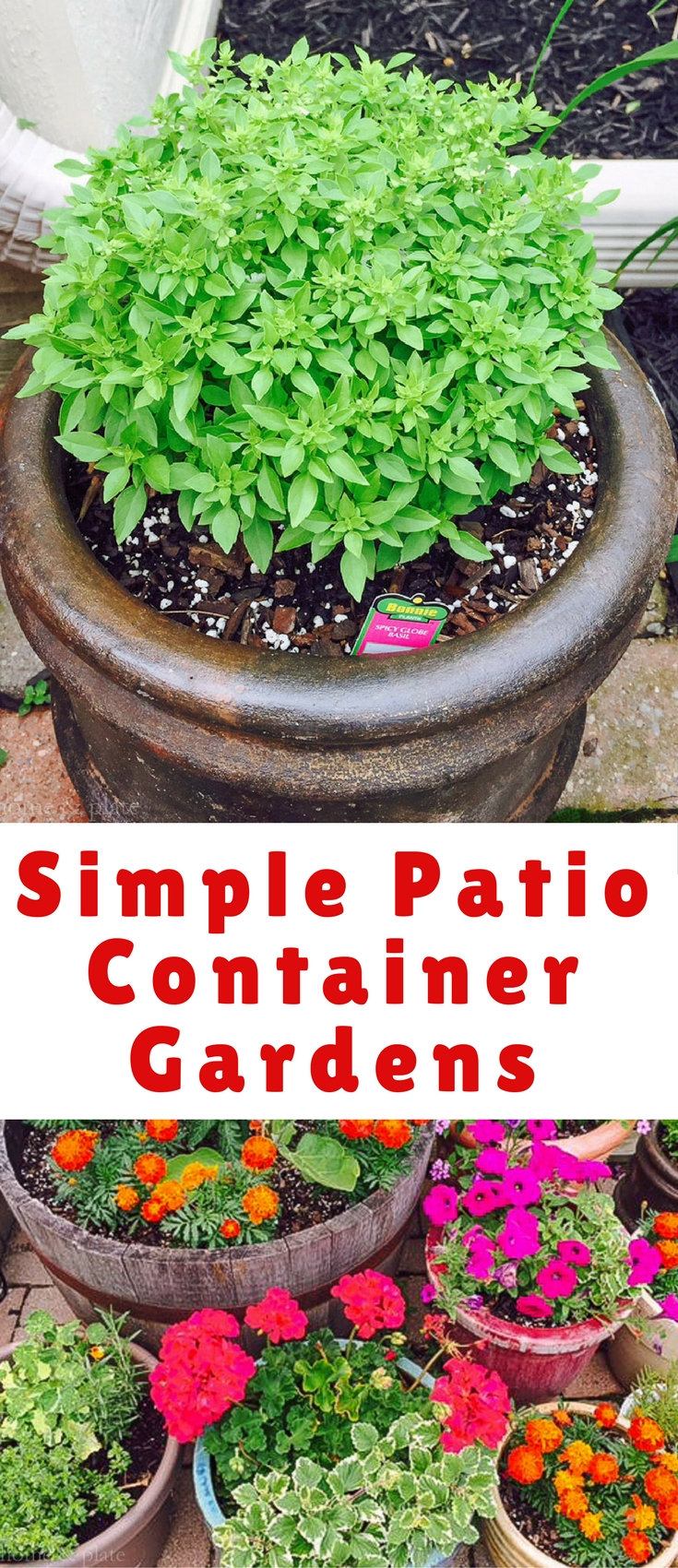 Make your small patio garden come alive this summer by using a variety of different sized pots and containers to add the right pops of color.