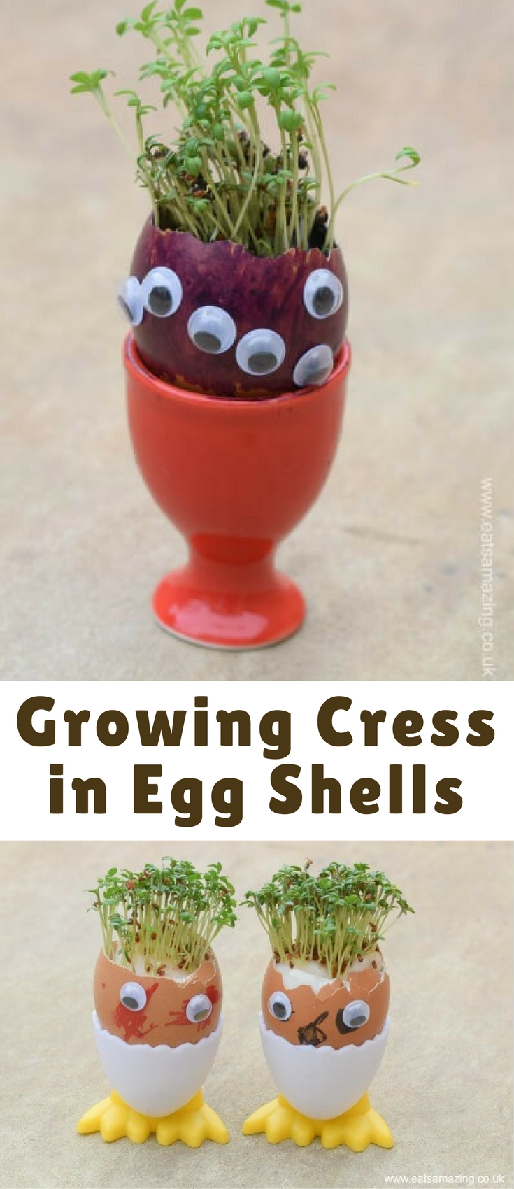 Do you remember growing cress in egg shells as a child? I think this is a classic childhood activity that everyone should try at least once in their life and it's the ideal place to start if you want your kids to get involved in growing food.